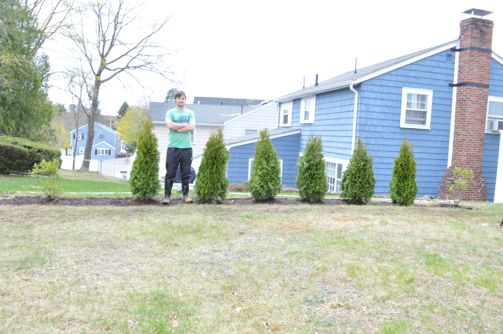 Planting a hedge -- Plaster & Disaster
